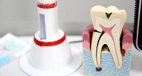 考え直したい歯の大切さ